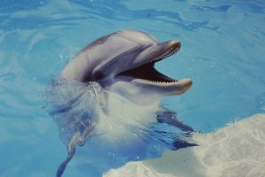 Why Swim with Sharks When You Can Swim with Dolphins?