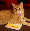 Cat on my book is a Zillionaire!
